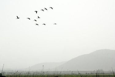 Birds in the fog by aronbrand
