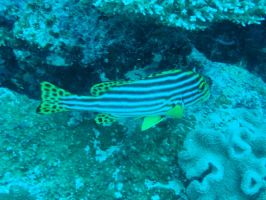 Sweetlips by Fo33y