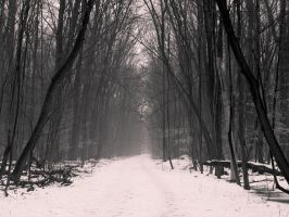 Grey Grey Woods by JohnKyo
