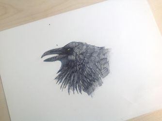 another raven by VikingOwl