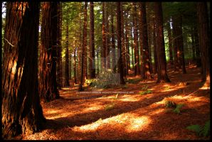 The Land of the Redwood Trees by Hitomii
