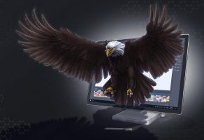Photoshop Creation becomes real: The Sea Eagle by Neyus
