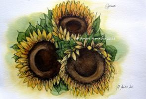 Sunflowers by flysch