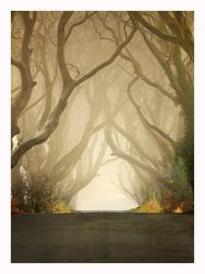The Dark Hedges 2011 by Klarens-photography