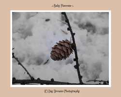 .:Baby Pinecone:. by DayDreamsPhotography