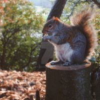squirrel by butcheredxbutterfly
