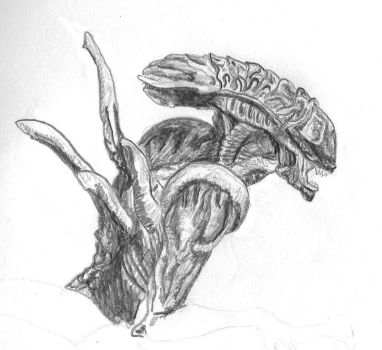 Alien Sketch 2 by NioTheDreamer