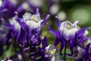 Pretty Purple Flowers by photographybypixie