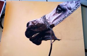 Arabian Horse WIP by thefrenchberet