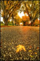 Autumn in Boys Town II by FramedByNature