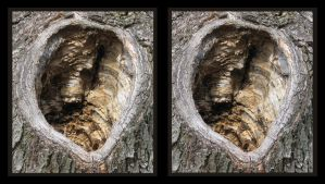 tree hole stereoscopic by pwg