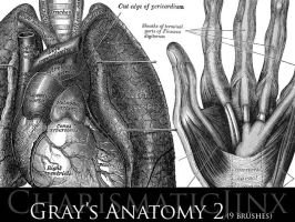 Gray's Anatomy 2 by CharismaticJinx
