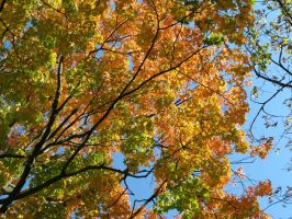 Beautiful Fall Colours by Michies-Photographyy