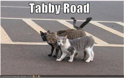 Tabby Road by RingoStarr911