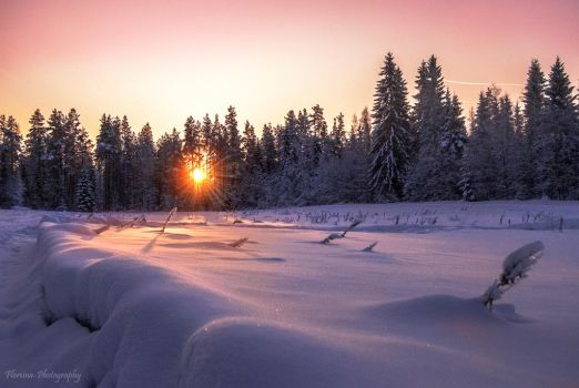 Early winter sun by Floreina-Photography