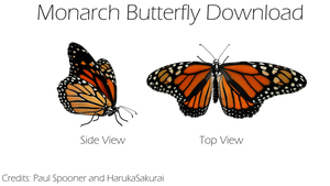 {MMD} Monarch Butterfly {DL} by HarukaSakurai
