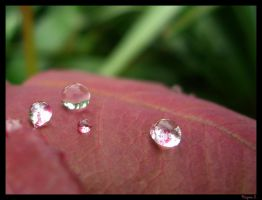 .droplet. by laminimouse