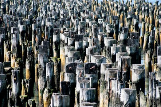 Wood Pilings in the Hudson River by Spinneyhead
