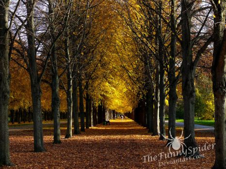 Golden Avenue by TheFunnySpider