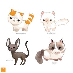 Unusual Breeds of Cat by ethe