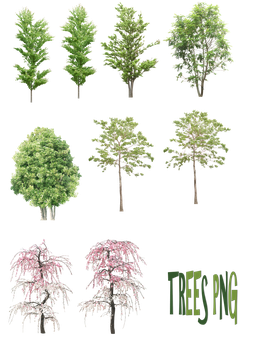 Trees png by mysticmorning