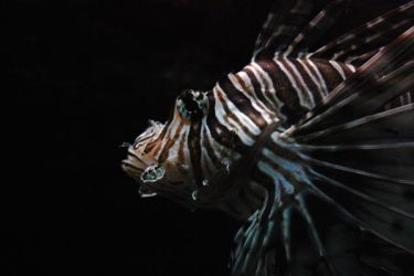 lionfish by Pendragon-007