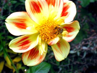 Abeille by NienorGreenfield