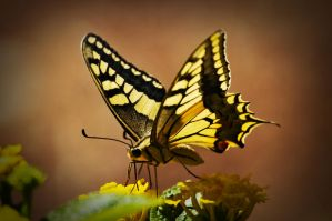 butterfly 2 by AiDeN100