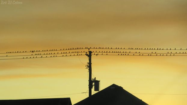 Birds on a Wire by EriiEtCetera