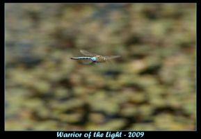 Emperor Dragonfly by WotL