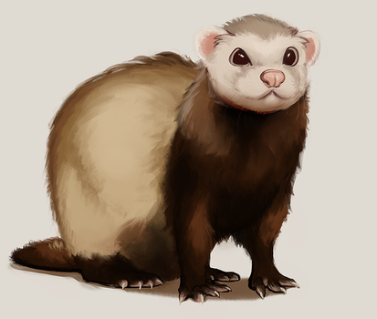 150508_ferret by PataYoh