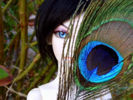Peacock Feather by CheyenneRalphsPhotos