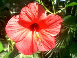 A big red flower by anonymoose1