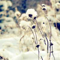 .: frost snow etc :. by all17