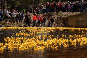 AdironDuck Race by MauserGirl