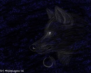 Wolf Wallpaper With Stars by xylophagous