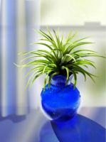Air Plant by OlgaAndreyeva