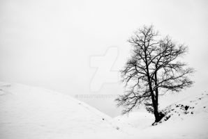 the white hills by guality