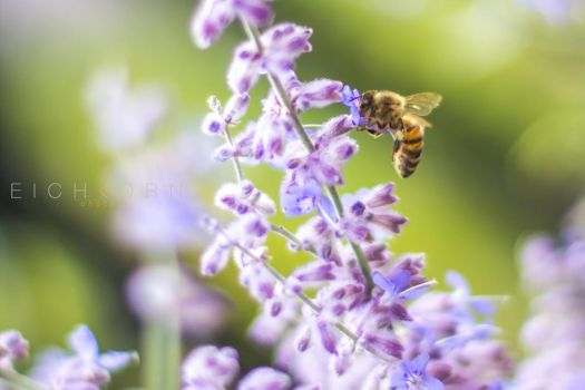 To bee or not to bee by EICHKORN-media