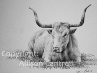 Longhorn by alliuscattus