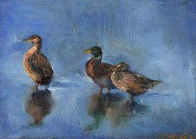 Ducks by Chromamelon