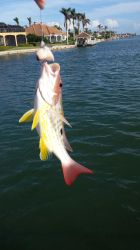 Yellow Snapper by awash2002