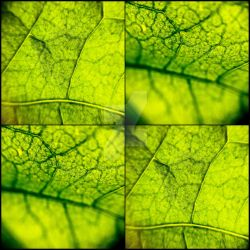 Leaf by Paseas-Images