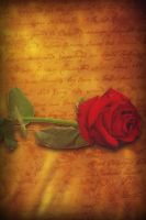 Book cover concept gold rose by DJMadameNoir