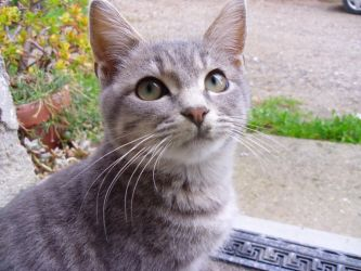 Little kitten by Odino87