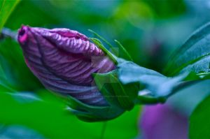 Unfurling by Mommynightskye
