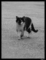 .cat on a road. by laminimouse