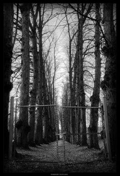 The Forbidden Path by TimelessVision