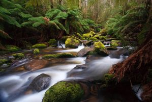 Toorongo River 3 by Bjay70