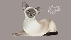 Siamese by Kitty-Winder